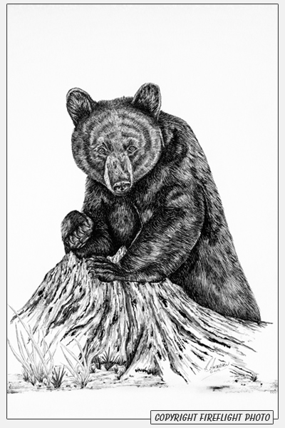 Black Bear Pen and Ink