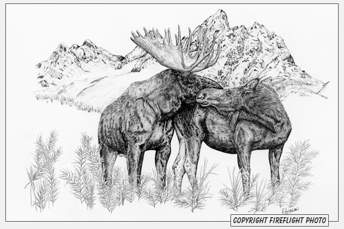 Moose Love Pen and Ink