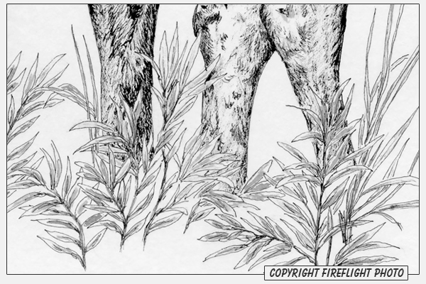 Grass Ink Drawing Detail