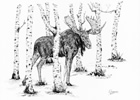 Bull Moose in Birch Trees Pen and Ink Drawing