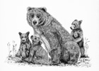 Grizzly Bear with 3 Cubs Pen and Ink Drawing