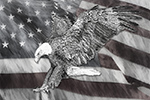 Patriotic Bald Eagle Painting