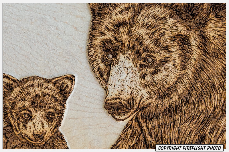 Black Bear Pyrography Detail